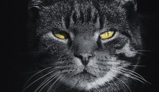 猫のふん対策まとめ。糞尿被害を食い止めて庭に入れない方法。