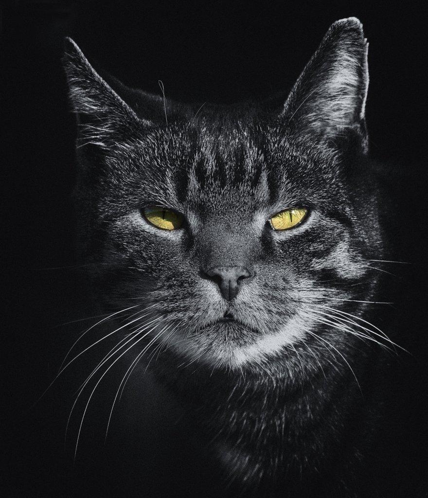 猫 ふん 対策