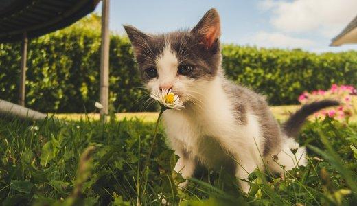 野良猫の効果的な駆除方法と間違った駆除方法まとめ