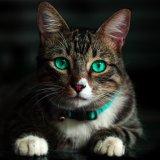 野良猫が撃退できない時は超音波で追い払うのがおすすめ